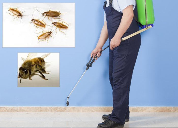 Pest Control Macquarie