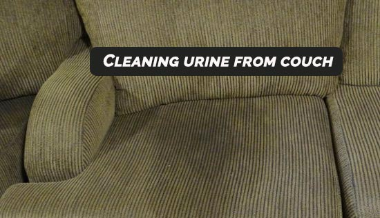 Urine Cleaning from Couch Kingston