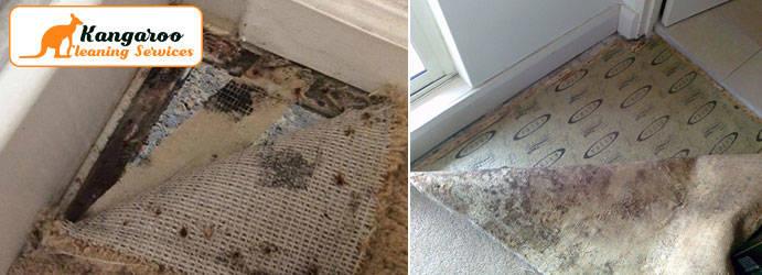 Carpet Mould Removal Sydney