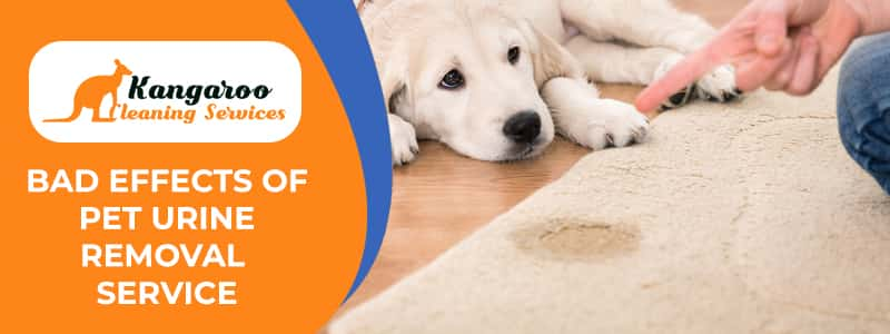 Bad Effects of Pet Urine Removal Service